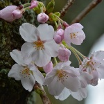 丹那の山にも春が来て-