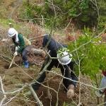 岩手から神奈川へ、旅した苗木を植える