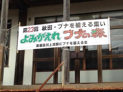 20151103ブナ②