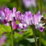 ミツバチになろう